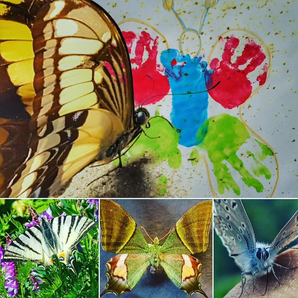Döblinger Schmetterlingswoche - Tagesmutter*vater